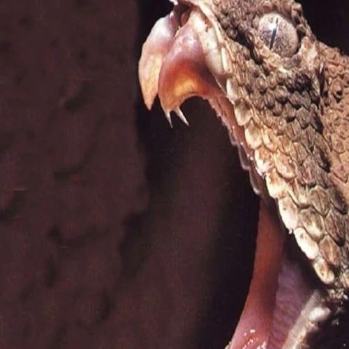 Esta serpente com cauda em forma de aranha vai assombrar seus sonhos