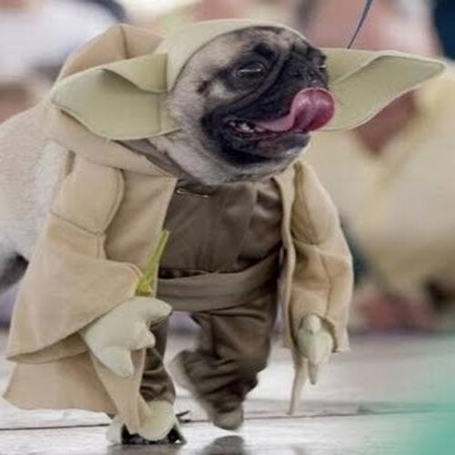 Muitos cachorros fofos vestidos como personagens de Star Wars