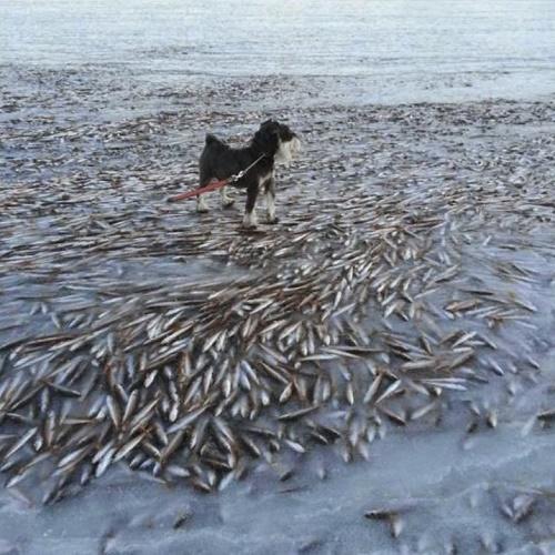 Mar congela e morador flagra cão passeando sobre cardume