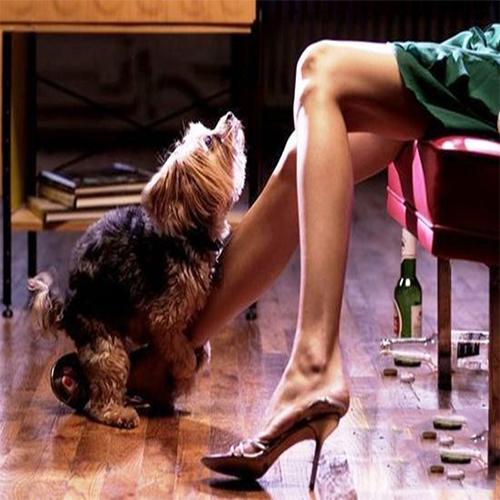 Saiba os motivos dos cachorros grudarem nas pernas das visitas