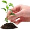 Cultivando Saúde